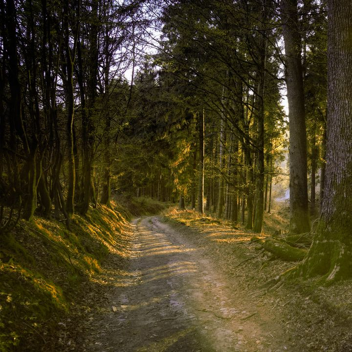 Long Road in Forest - Creative Photography