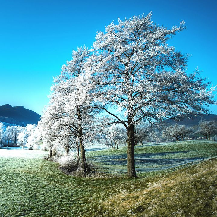 Beautiful Trees with White Leaves - Creative Photography