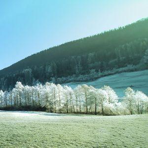 Beautiful landscape of white trees