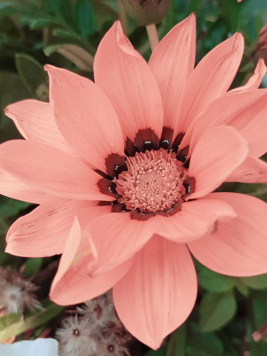 Native Sunflowers photography - Creative Photography