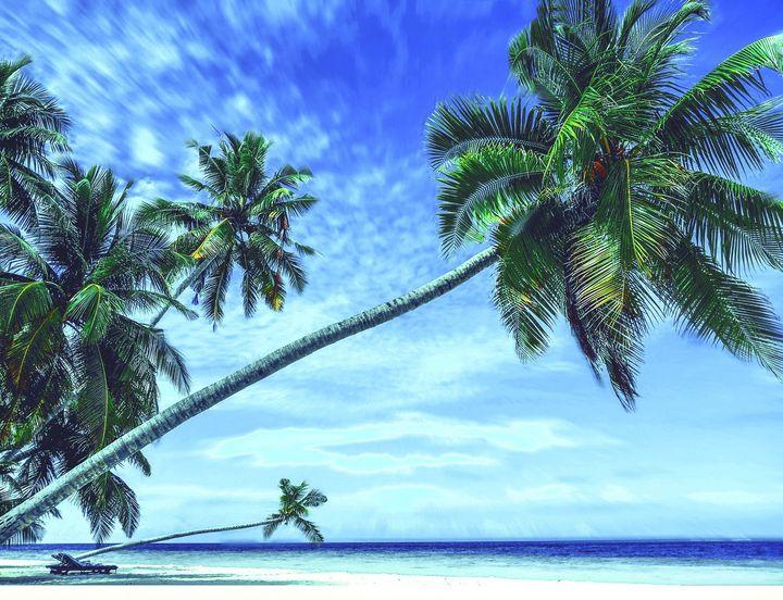 Palm tree beach - Creative Photography