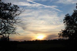 Black Moss Sunset