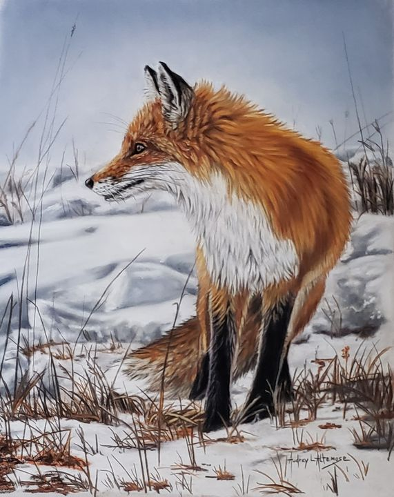 Red Fox - PetPortraits & Fine Art by Audrey Altemose