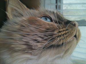 Pet Portrait of Cletus