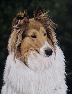 Pastel Pet Portrait of Daisy