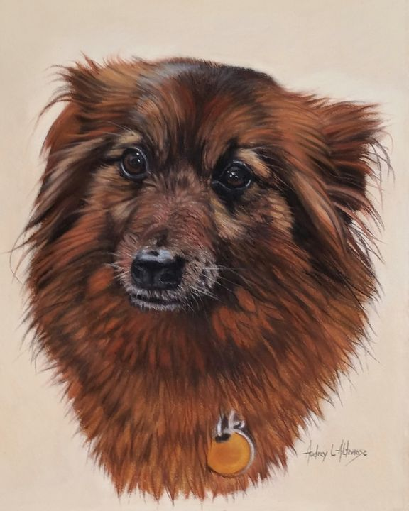 Pastel pet portrait - PetPortraits & Fine Art by Audrey Altemose