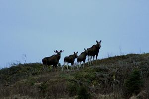 Family of Elks