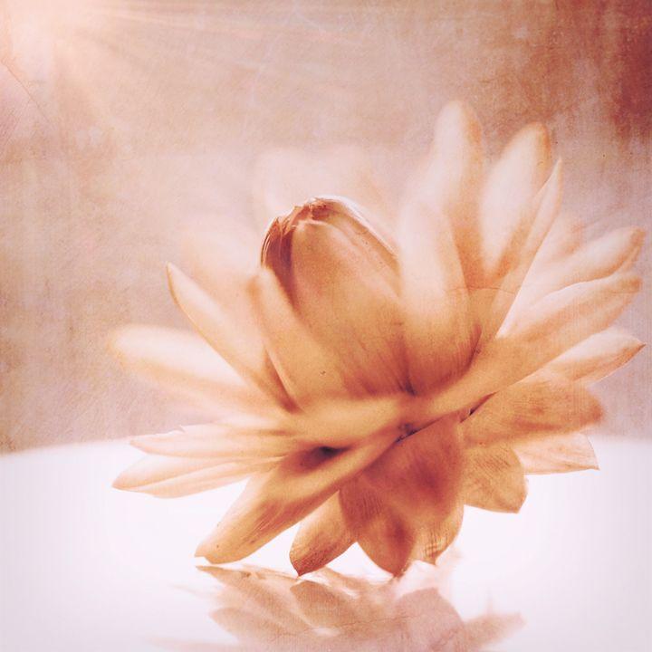 Twirl - Andrea Dixon