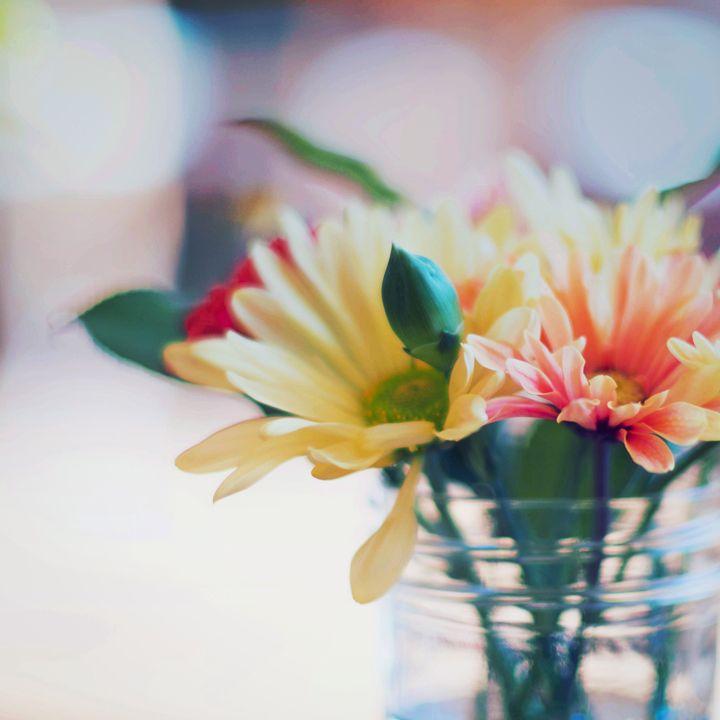 Springing - Andrea Dixon