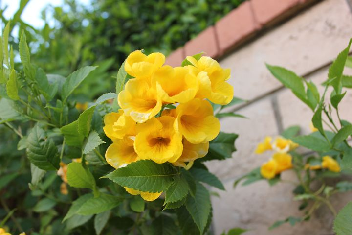 yellow flowers - Beauty