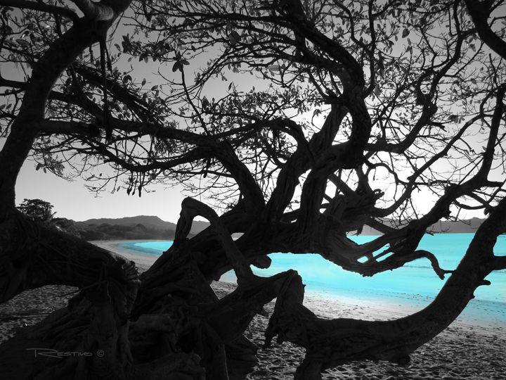 Aqua Silhouette - Terry Restivo
