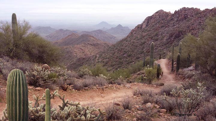 Sunrise Mountain Trail - Terry Restivo
