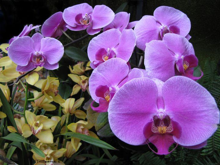 Orchid Garden - Terry Restivo