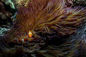 Nemo at home