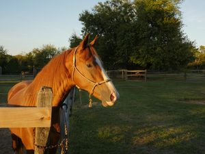 A Horse Called Apollo