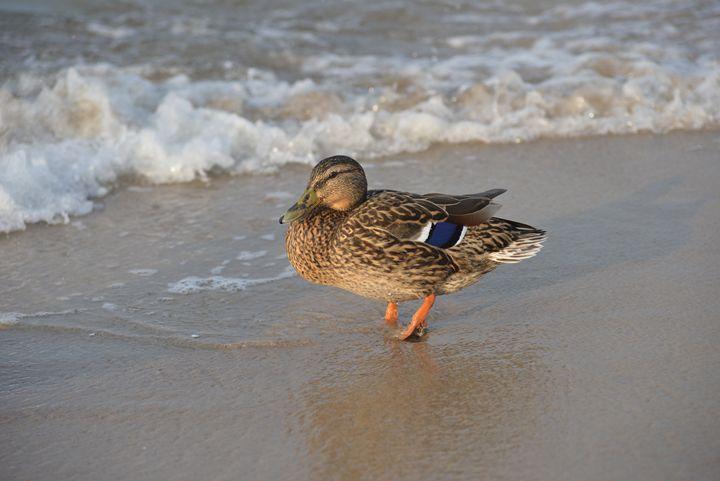 duck - Irina