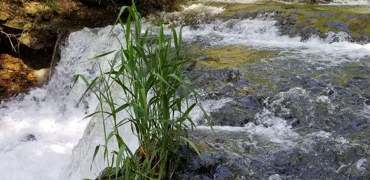 Grass in River - Wendy LaJean
