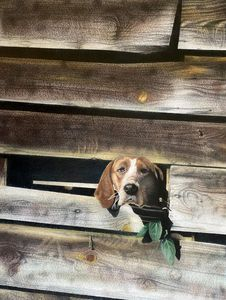 Dog Shed - Allen's Artwork