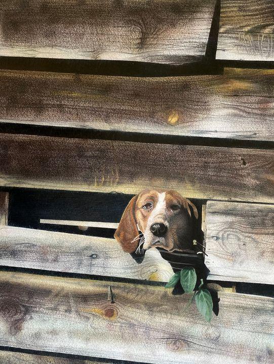 Dog Shed - Allen's Artwork