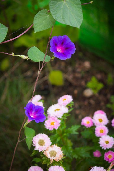Garden Flowers - Andrey