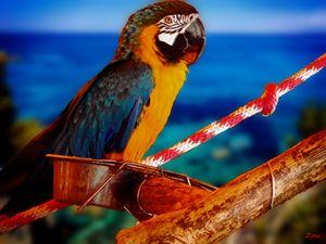Bird of Paradise - Zima