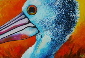 Pelican Sunrise - Zima