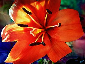 Orange beauty - Zima