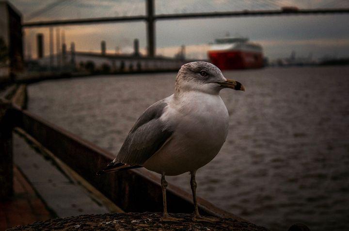 BIRD - Vincent blake