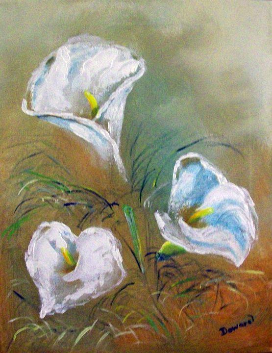 Calla lillies 1 - Raymond Doward