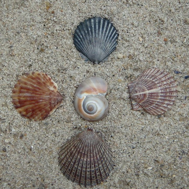 Seashell Spiral Directions - Earthworks Art Designs and Photography
