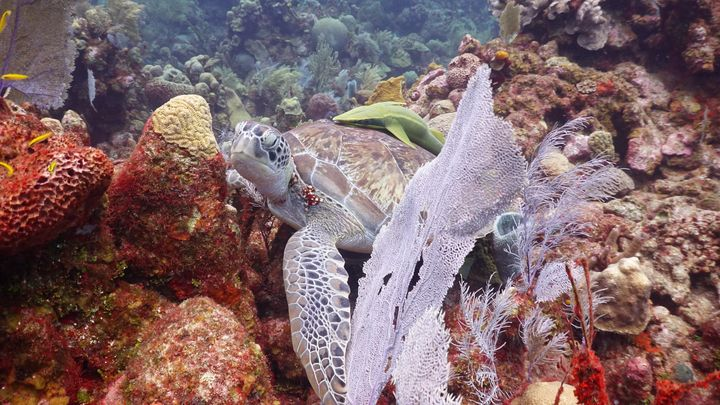 Under the Sea - Karen Smith