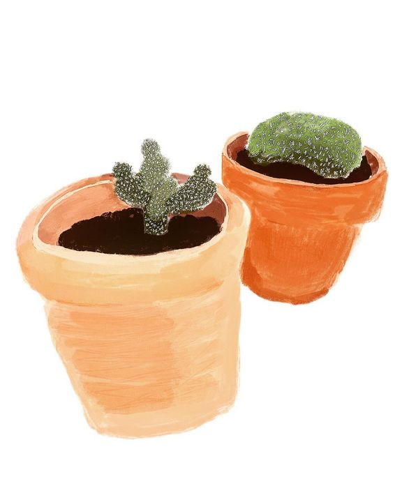 Baby Cacti - maddi made