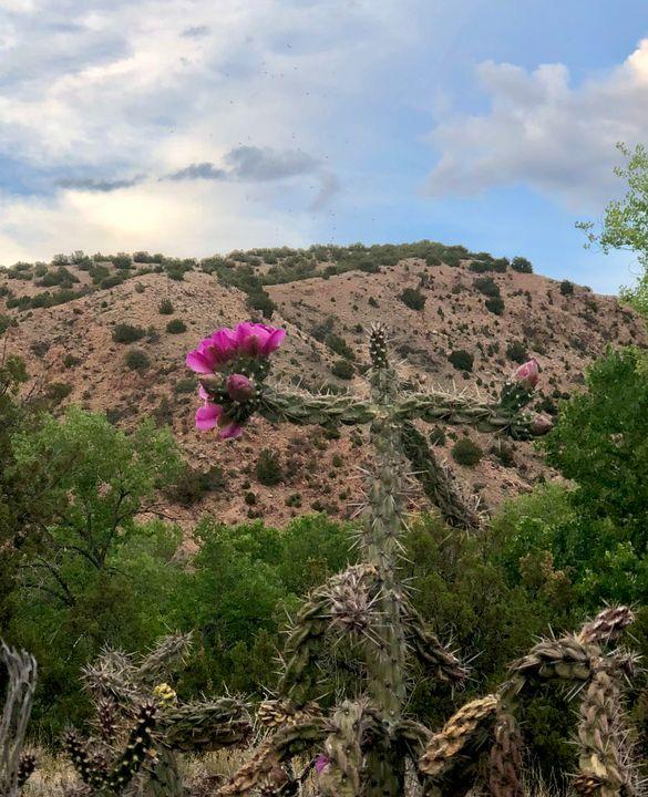 Desert Rose - Sarin's Labrynth