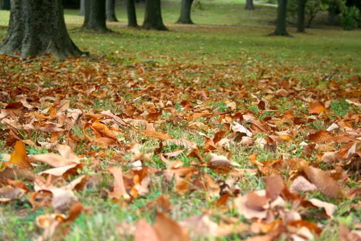 autumn - Photos@18