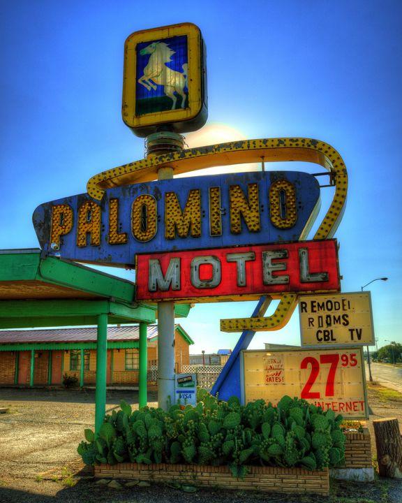 Palomino - Darin Williams Photography