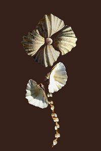 Shell Flower nº1