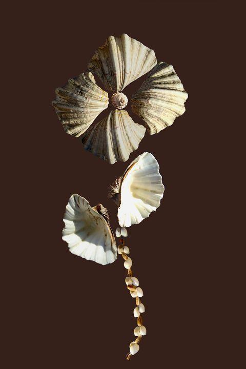 Shell Flower nº1 - amatartD
