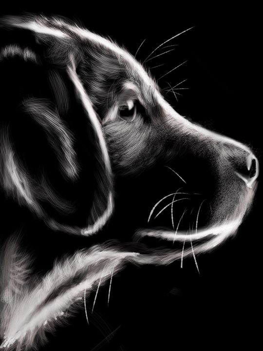 dog - digital art by shannon green