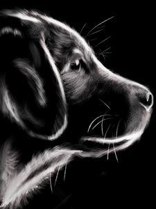 dog - digital art by shannon green