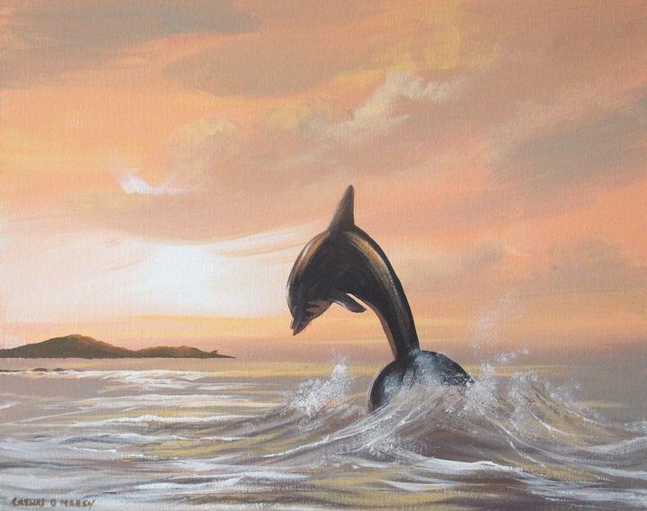 dolphin at  cruagh island - cathal o malley
