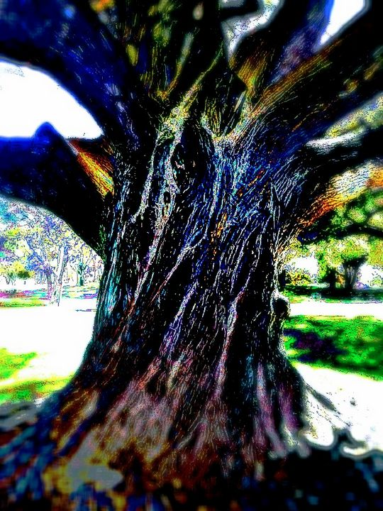 Grandfather Tree Calling To Me - EcLectic Thunder of Catherine's Artistry