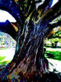 Oak Tree picture from Waller Park in