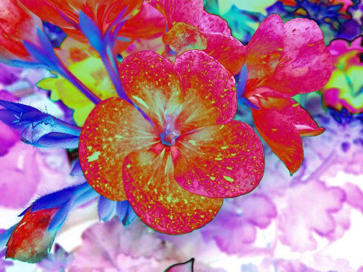 Heaven's Geraniums - Elizabeth Wiegel