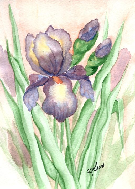 Purple Iris with buds - WatercolorsbySandy
