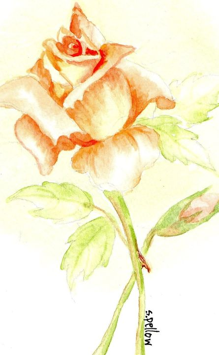 Apricot colored rose - WatercolorsbySandy