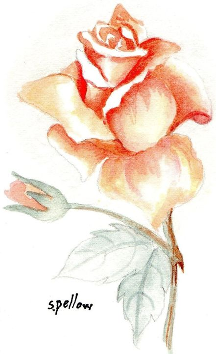 Peach rose - WatercolorsbySandy