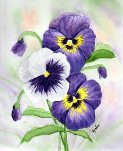 Purple Pansies - WatercolorsbySandy