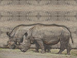 rhino art