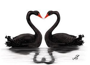 Black swan mirror