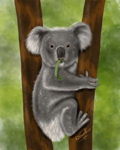 Koala digital painting
